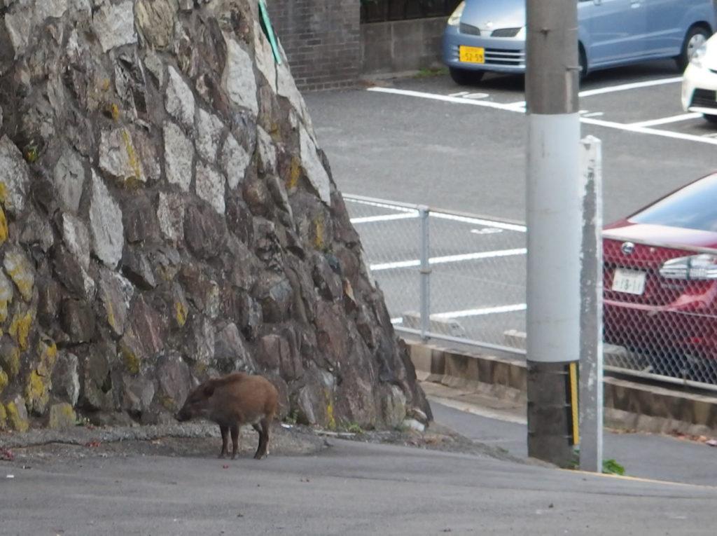 boar04