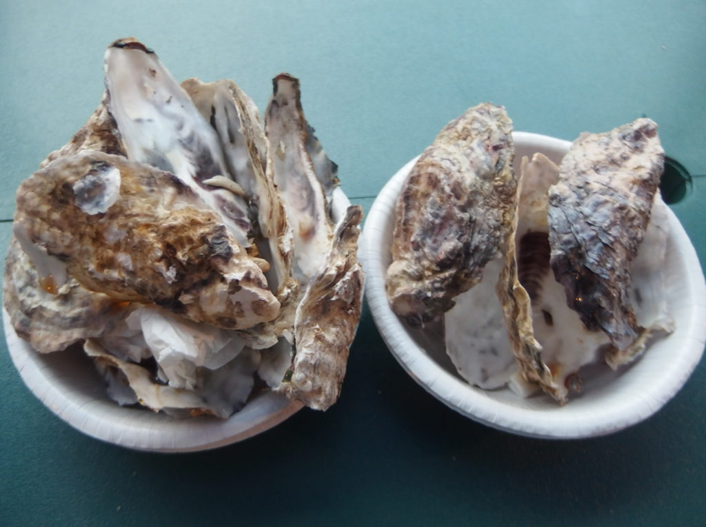 oyster22