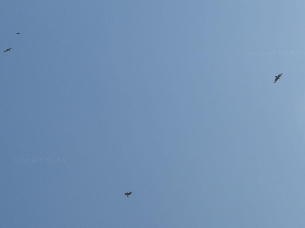 hawks03