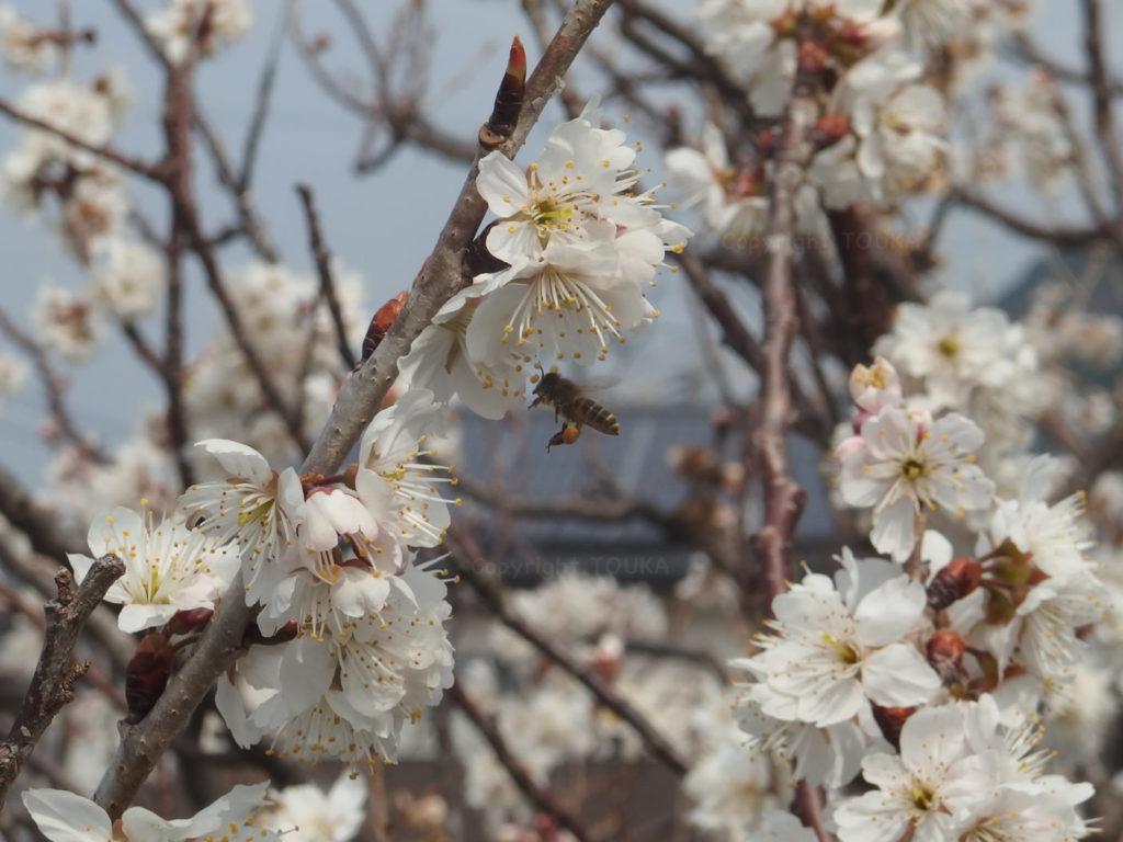 spring2019-01