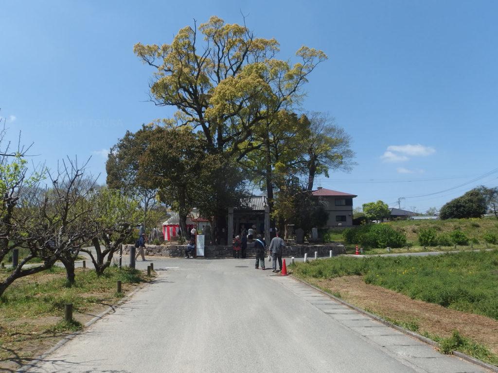 sakamotot01