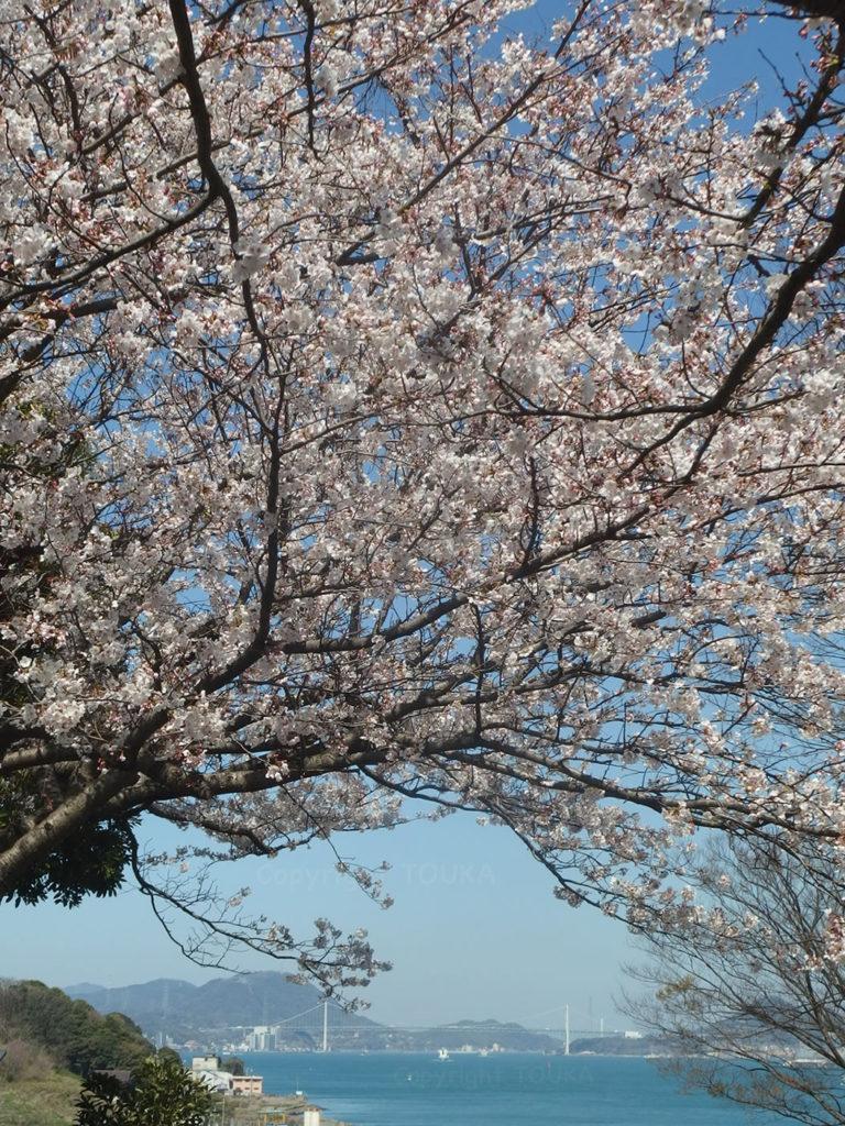 sakurahikoshima01