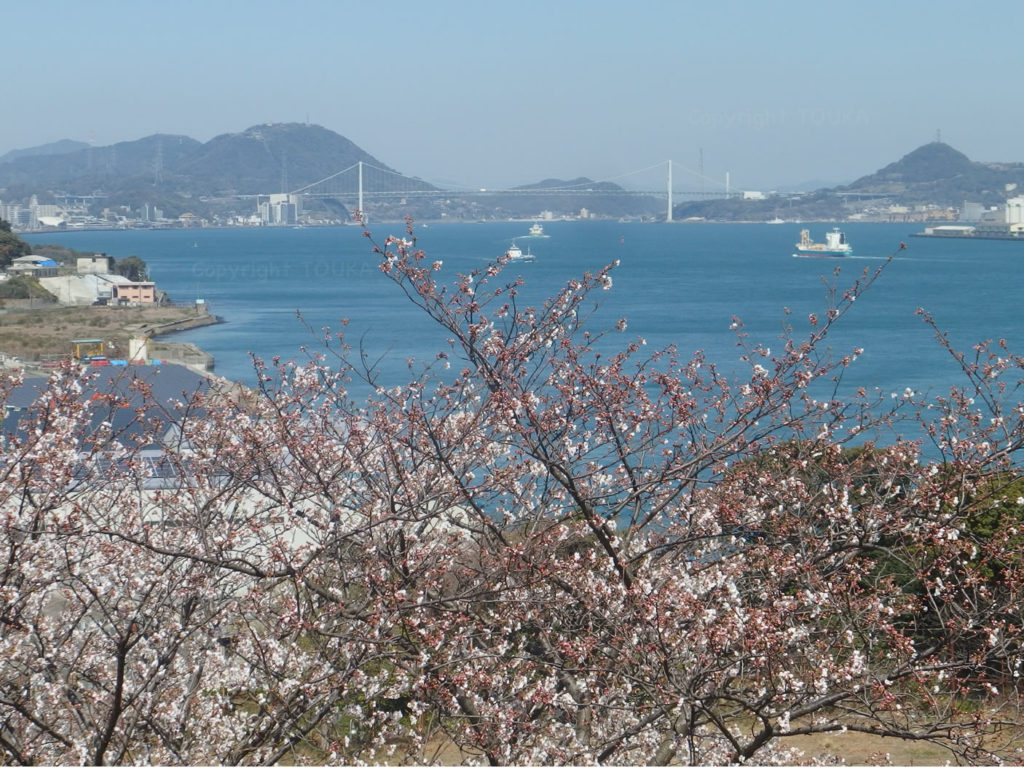 sakurahikoshima03