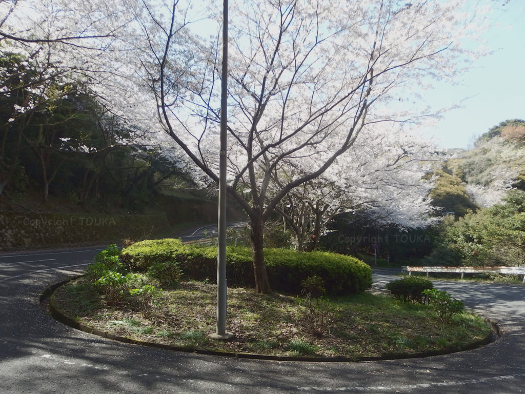 sakuramekari02