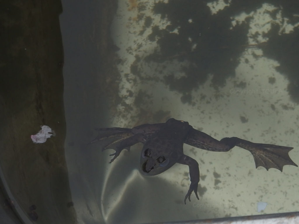 springfrog01