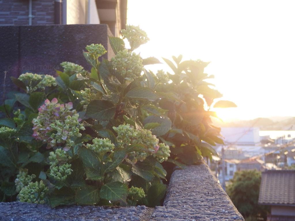 suguflower03